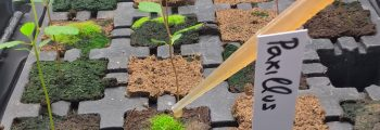 Inoculation of seedlings with symbiotic microorganisms