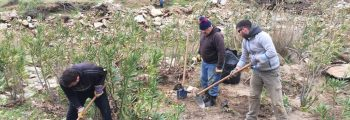 The first phase of tree planting in the alder forests of Andros Island has been completed