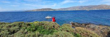 Visit to Mediterranean shag colonies