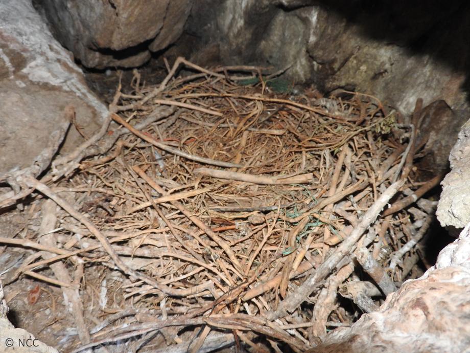 Έλεγχος φωλιών Θαλασσοκόρακα για πλαστικά & καθαρισμός νησίδων