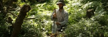Δειγματοληψίες στα δάση σκλήθρων