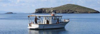 Πρώτη επίσκεψη πεδίου για τη Μεσογειακή φώκια