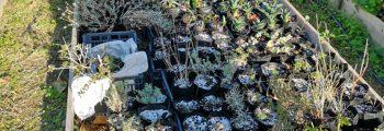 Συλλογή αντιπροσωπευτικών φυτών της τοπικής χλωρίδας
