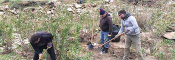 Ολοκληρώθηκε η πρώτη φάση φυτεύσεων δένδρων στα δάση σκλήθρων