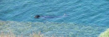 Δημοσίευση Θεματικού Newsletter: Οι Μεσογειακές Φώκιες της Άνδρου